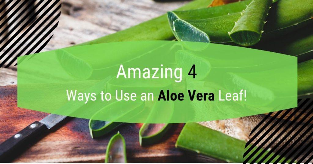 4 Ways To Use Aloe Vera Leaf